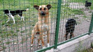 110506123157_kosovo_dogs_640x360_ap_nocredit